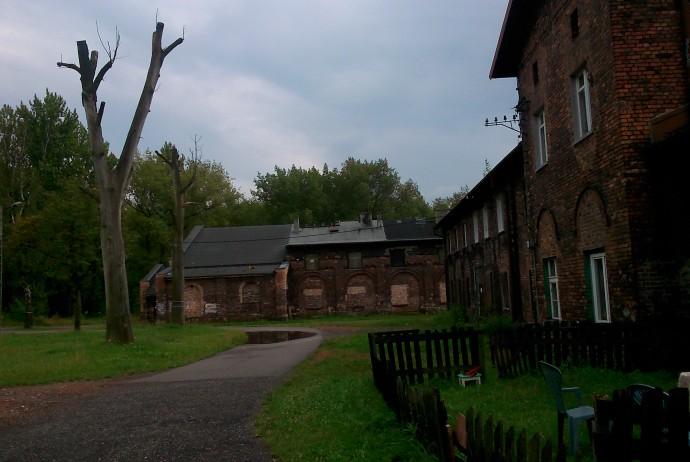 Kolonia Alfred Fot. M.N.